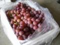 家庭贮藏有机葡萄措施
