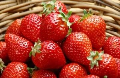 大棚种植草莓技术