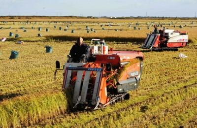 黑龙江水稻种植病虫害防治技术